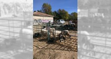 Feria de ganaderia 2018 09