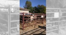 Feria de ganaderia 2018 11