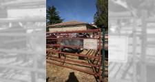 Feria de ganaderia 2018 12