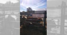 Feria de ganaderia 2018 13