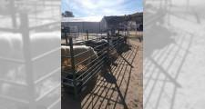 Feria de ganaderia 2018 14