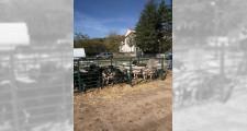 Feria de ganaderia 2018 16