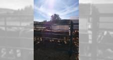 Feria de ganaderia 2018 17