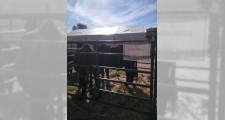 Feria de ganaderia 2018 18
