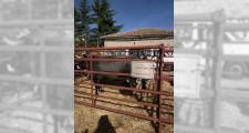 Feria de ganaderia 2018 19