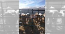 Feria de ganaderia 2018 21