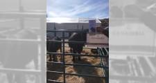 Feria de ganaderia 2018 22