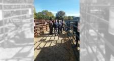 Feria de ganaderia 2018 26