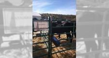 Feria de ganaderia 2018 28