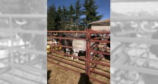 Feria de ganaderia 2018 31