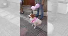 Marcha solidaria contra el cancer 2018 10